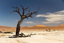 Die Wüste Namib  von Jürgen Klust