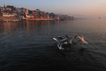 Ghats of Varanasi and the Birds - Varanasi, India by Soumen Nath