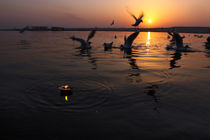 Flight of Delight-6, Varanasi, India by Soumen Nath