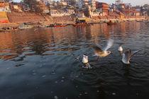 Varanasi, Ghats, birds, Benares, Uttar Pradesh, India von Soumen Nath