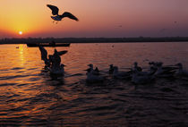 Flight of Delight-5, Varanasi, India by Soumen Nath