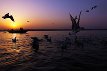 Flight of Delight-2, Varanasi, India von Soumen Nath