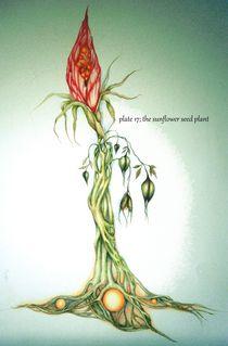 The Sun Seed Flower by Helena Wilsen - Saunders