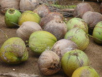 Coconuts von Veronica Di Dato