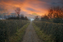 Bowes Path Home von Steven Stoddart