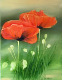 Mohn am Wegesrand by Ingrid Clement-Grimmer
