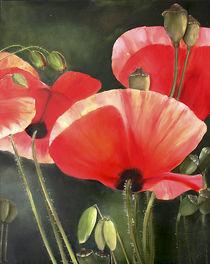 Mohnblüten von Ingrid Clement-Grimmer