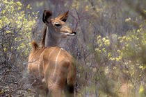 Safaribilder  von Jürgen Klust