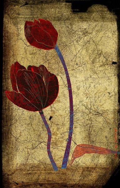 Tulipes-copie-2