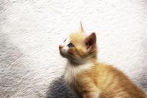 Rotes Kätzchen von pahit