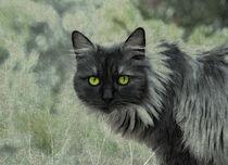Katze in Grün by pahit