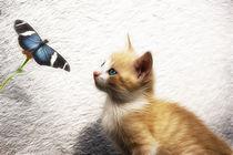 Rotes Kätzchen mit Schmetterling von pahit