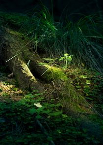 Deep woods von Richard Homola