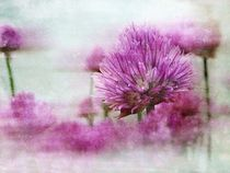 Alliumblüte by claudiag