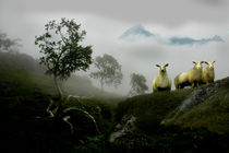 Cuorious sheep in a foggy landscape by Stein Liland