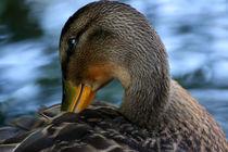 What the duck?! by Alex Beldea