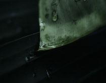 Eden Project Macro - Four von Matthew Ferris