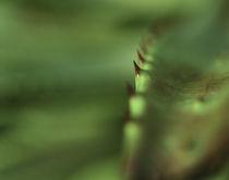 Eden Project Macro - Two by Matthew Ferris