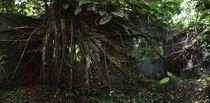 Nature Reclaiming Its' Own von Robert Oelman