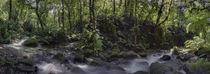 Inside the Murapal Rain Forest by Robert Oelman