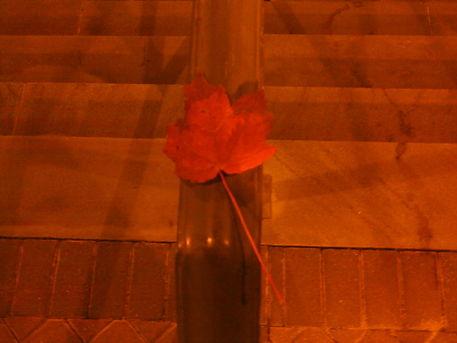 A-fallen-red-leaf