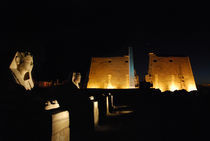 Sphinxs at Luxor temple, Egypt. von David Love