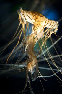 The Last Jellyfish