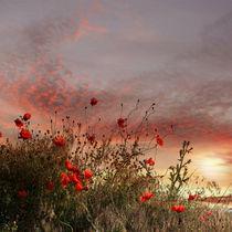 Flower sunset von Teodora Chinde