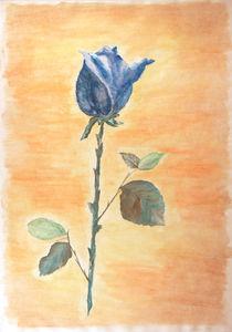 Blaue Rose - Blue rose von Patti Kafurke