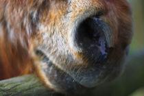 Pony von Simon Bell