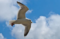 Seagull 1 by Tom Palmer