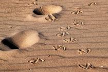 Spuren im Sand von captainsilva