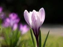 Frühlingserwachen von Ingrid Clement-Grimmer