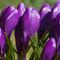 Dartmoor-033
