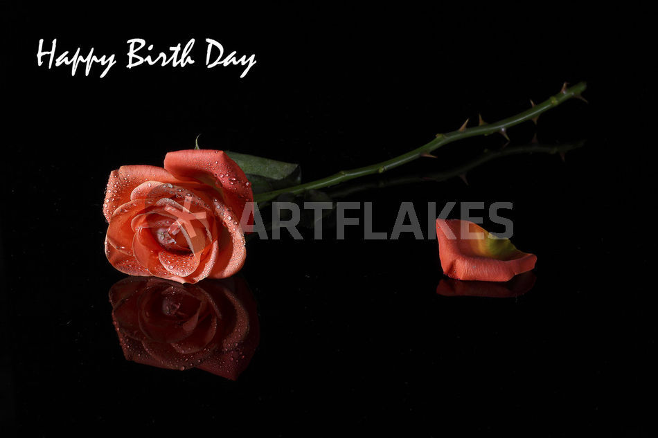 Happy Birthday Red Rose Greeting Card Fotografie Als Poster Und