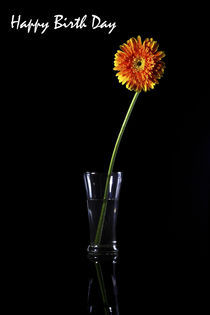 Happy Birthday , Gerbera, Greeting Card by Soumen Nath