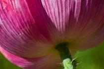Blumenmacro by stelda