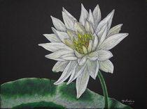 Water Lily by Olga Reukova