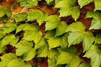 Leaf von Scott Smith