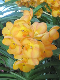 pretty yellow von whoiamann