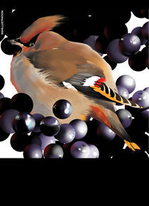WAXWING by SIMON HOWARD