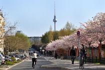 Mauerpark im Frühling von captainsilva