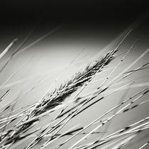 Sylt Impressions #25 by Melanie Hinz