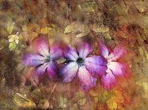 Drei BlütenPink von claudiag