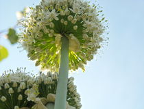 Flowers in the sun by Iulia Stancu