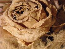 Pale rose by Iulia Stancu