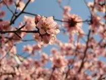 Spring by Iulia Stancu