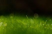 Gras 2 von bilderreich