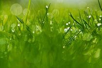 Gras 3 von bilderreich