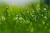 Gras 4 von bilderreich
